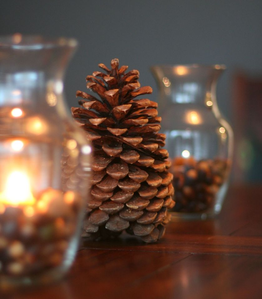 Pinecone Acorns