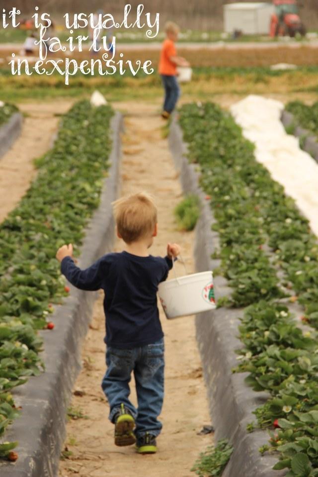 StrawberryBlog1