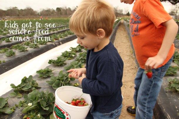 Strawberryblog3