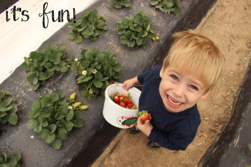 StrawberryBlog5